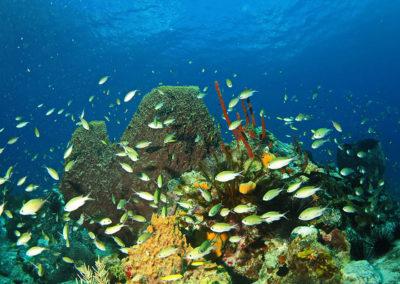 fonds marins martinique